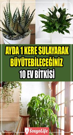 Small Balcony Design, House Prices, Growing Vegetables, Home Organization, Diy Home Decor, Cactus, Flora, Succulents, Eco Garden