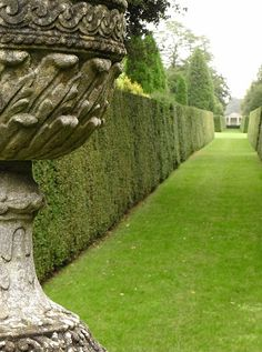 Beautiful hedge