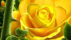 Rose Flowers - Rose Flowers Images - Rose Flowers Pics to find rose flowers pics,rose flowers images,rose flowers photos,flowers @ http://heartjohn.com/