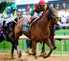 2011 - Animal Kingdom -137th Saratoga Horse Racing, Smarty Jones, Derby Horse, Triple Crown Winners, American Pharoah, Derby Winners, Big Brown, Thoroughbred Horse, Race Horses