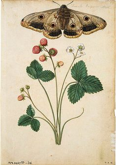dolce-principe-andree:    Moths and Flowers by Jacques Le Moyne