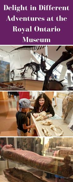 Delight in Different Adventures at the Royal Ontario Museum