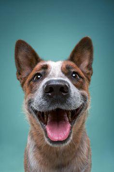 """O fotógrafoAlexander Khokhlov criou o divertido projeto """"The Dog Show"""" para explorar a natureza expressiva dos cachorros. Confira!"""