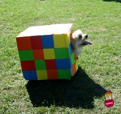 This pup dressed up as a Rubik's Cube and won best costume in our costume contest! | First Coast No More Homeless Pets | #dogtoberfest2014 #fcnmhp