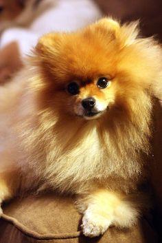 This looks just like my Cinnamon... I miss my little angel <3 {Sylvia}