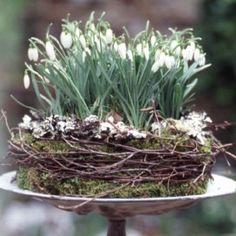 Sneeuwklokjestaart - Een beetje voorjaar op tafel. Landleven     Geniet van de eerste lentebloemen met deze originele sneeuwklokjestaart en plaats hem als natuurlijke blikvanger op tafel.