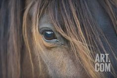 Close-Up of Crioulo Horse Looking at Camera Photographic Print by Luis Veiga at Art.com
