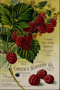 quenalbertini: Raspberries for Decoupage