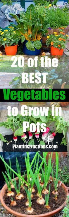 Vegetables that THRIVE in pots or containers! Perfect for small gardens or even balconies! #gardeningideas