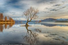 Photographer Linda Cutche said: 'I had heard so much about this famous tree in Lake Wanaka [in New Zealand]. Although this scene had been photographed by many, I was artistically challenged to take my own version. The idea was to go on an early morning venture and get a good spot before the sun rose, capturing the glory of an amazing sunrise showering the tree in a golden light'