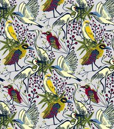Pássaros - Capibaribe