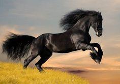 Poster, Tiere 18, Pferd Perde Rappe Hengst Tier Reiten Natur Mustang Wild A3