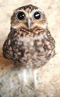 WHO, ME?! @NickoleRinde
