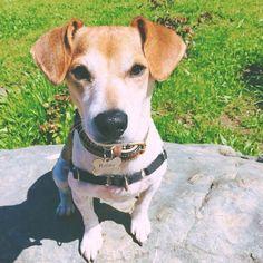 Well seeing as it's #nationalpuppyday #Ridley #dogsofsf #handsomedog
