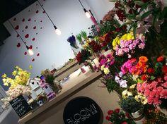 Kwiaciarnia Bloomi