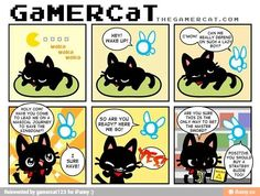 Gamer cat