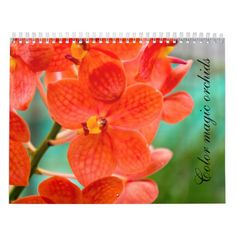 Orchids in colorful blooms Color Magic, Bloom, Colorful, Orchids, Calendar