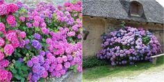 BERV nos cuenta todos los pasos a seguir para conseguir flores tan bellas como estas.