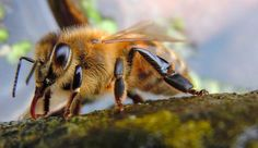 Over Half Of New York's Bees Died Last Year—And This Isn't News - Hobby Farms