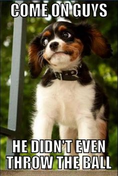 That awkward moment when you are outsmarted by your dog. If only my dog were that smart. Lol