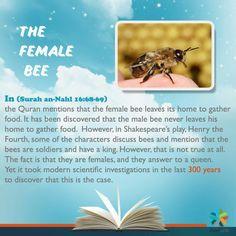 Mirecal 👆👆 the female bee