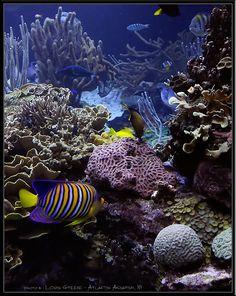 Public Aquarium Photos - Reef Central Online Community