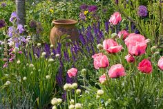 Create stunning, easy care and long-lasting border combinations for your late spring to mid summer garden, intermixing the spectacular flowers of Oriental Poppies (Papaver Orientale) with the rich, cool purple flower spikes of Sage and the highly architectural Ornamental Onions (Alliums)