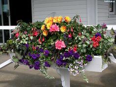Kwiaty, Balkonowe, Kompozycja