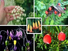 21 Plants You Should Never Eat Or Touch ►► http://www.myfamilysurvivalplan.com/21-plants-you-should-never-eat-or-touch/?i=p