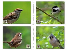 Songbird Photography Set of Four Bird Photos by KneeDeepStudio