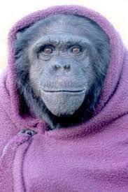 Kuvakaappaus: Jukka Niemi - Jukka Niemi shared a link. Ape Monkey, Pure Products, Blessed, Jerusalem, Ash, Pray, Pro Bono, Basic Instinct, King