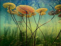 G1 - Liga de fotógrafos escolhe melhores fotos de natureza de todos os tempos - notícias em Ciência e Saúde