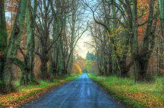 Thetford Forest   Autumn   Road