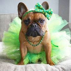 Somebody loves reasons to dress up, and Saint Patrick's Day is no exception.
