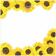 Sunflower Border Isolated On White Stock Image - Image of yellow, plant: 15092809 Sunflower Clipart, Sunflower Pictures, Picture Frames For Parties, Picture Borders, Happy Jar, Apple Watch Wallpaper, White Stock Image, Autumn Art, Floral Border