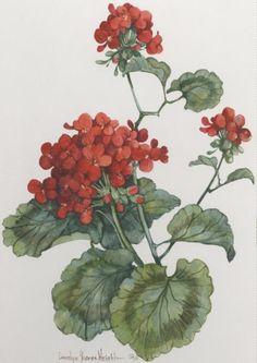 Geranium watercolor $80.00