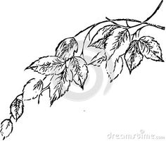 Illustration about Leaves Adult Children Coloring Book Black White Sketch Cartoon Children Anti-stress Relaxing Coloring. Illustration of candles, book, crystals - 133226797 Adult Coloring, Coloring Books, Cartoon Leaf, Anti Stress, Adult Children, Sketch, Leaves, Candles, Black And White
