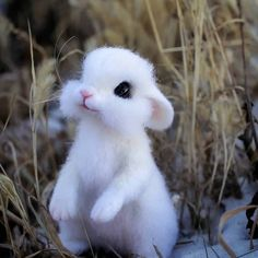 funny animals with captions Baby Animals Super Cute, Cute Baby Bunnies, Cute Little Animals, Bunny, Baby Animals Pictures, Cute Animal Drawings, Cute Animal Pictures, Images Of Cute Animals, Funny Animals With Captions