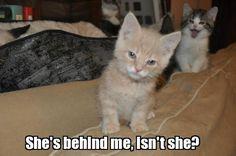 photo bomb kitten Meme | Slapcaption.com