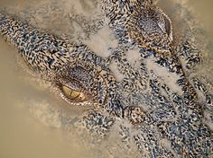 Crocodile Picture -- Animal Wallpaper -- National Geographic Photo of the Day