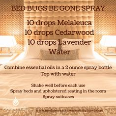 oil for ants If your travels land you in a hotel this summer, keep this spray handy to deter. If your travels land in a hotel this summer, keep this spray handy to detergent Bed Bugs Essential Oils, Essential Oil Bug Spray, Essential Oil Uses, Homemade Cleaning Products, Natural Cleaning Products, Cleaning Tips, Yl Oils, Doterra Essential Oils, Young Living Oils