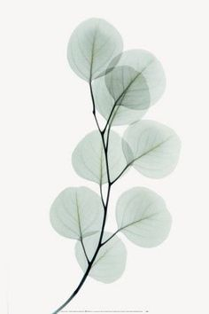 calm & sheer watercolor leaves