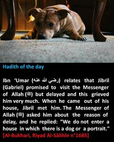 Dogs and potraits in the house. Islam Hadith, Islam Muslim, Allah Islam, Islam Quran, Hadith Quotes, Ali Quotes, Quran Quotes, Beautiful Prayers, Beautiful Islamic Quotes