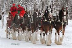 NH Anheuser Busch Clydesdale Horse Photos Visit White Mountains New ...