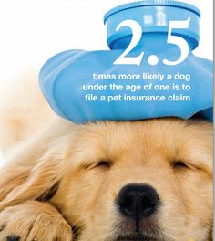 Pet insurance isn't just for older pets. In fact, dogs under the age of one are actually MORE likely to file a pet insurance claim!