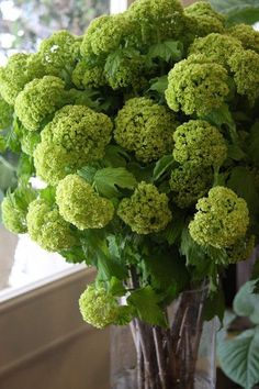 viburnum is great for adding flashes of citrus green to your winter wedding flowers. Available in the UK in January for a winter wedding - seasonal winter wedding flowers xx Types Of Flowers, Green Flowers, Spring Flowers, White Flowers, Beautiful Flowers, Snowball Viburnum, Green Texture, Flower Names, Seasonal Flowers