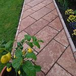 Outdoor Structures, Plants, Travertine, Paving Stones, Wall Panelling, Natural Stones, Lawn And Garden, Plant, Planets