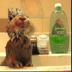 Gotta show bunnies some love too..