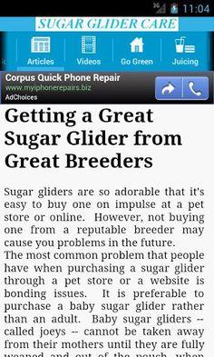 Sugar Glider Care!
