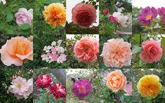 http://blog.livedoor.jp/oriori1211/archives/52029092.html